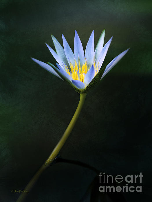 Jan Pudney - Inner glow