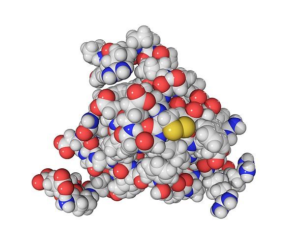 Insulin-like Growth 2 Factor Molecule Print by Laguna Design