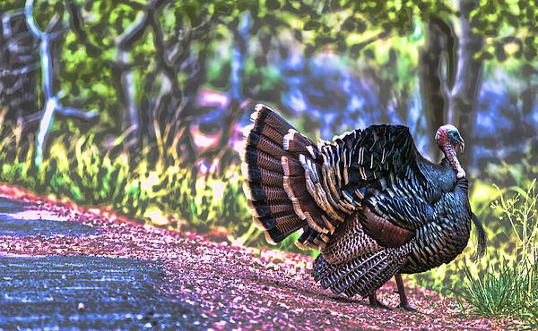 Intense Tom Turkey Display Print by Gregory Scott