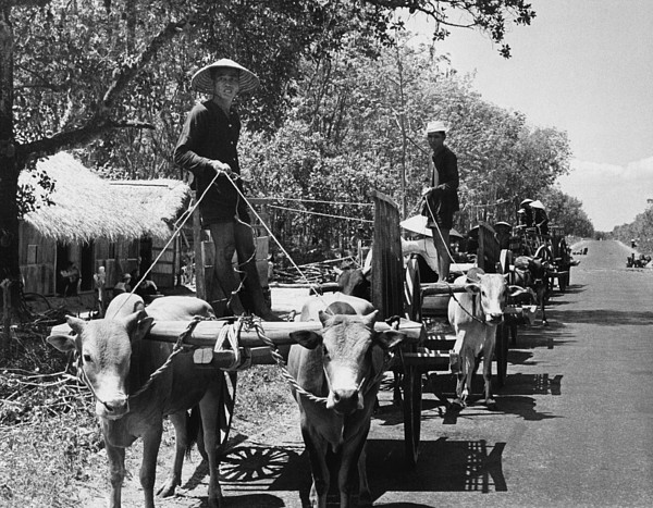 vietnamese refugees in america 2013-04-28 still vietnamese refugees: column  the first is filled with horror stories and images of a ravaged land once torn by an american-led war.