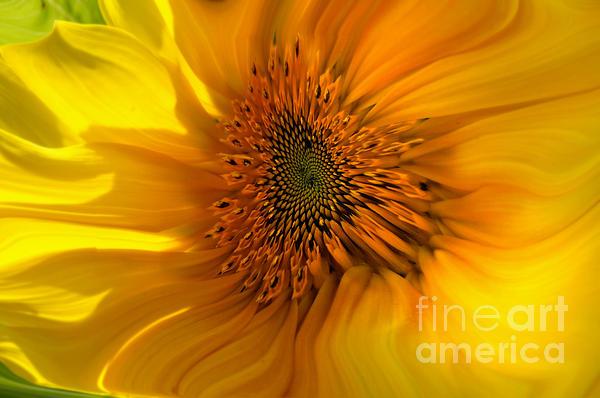 Benanne Stiens - Interpretation of a Sunflower