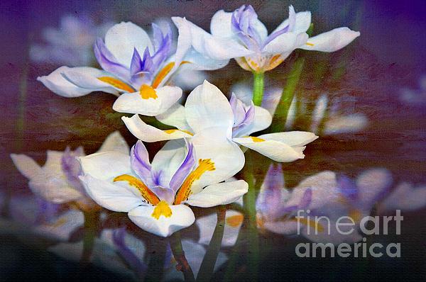 Iris Art Print by Kaye Menner