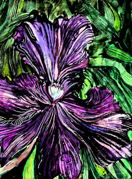 Iris Print by Mindy Newman