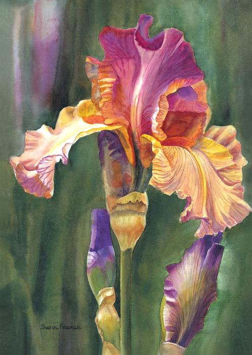 Iris On The Warm Side Print by Sharon Freeman