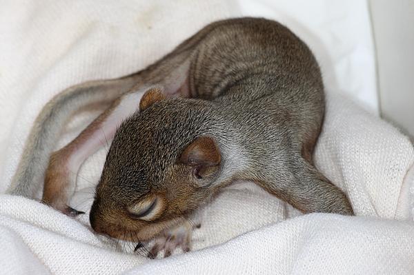 Janara  Hoppock  - Itsy Bitsy Baby Squirrel
