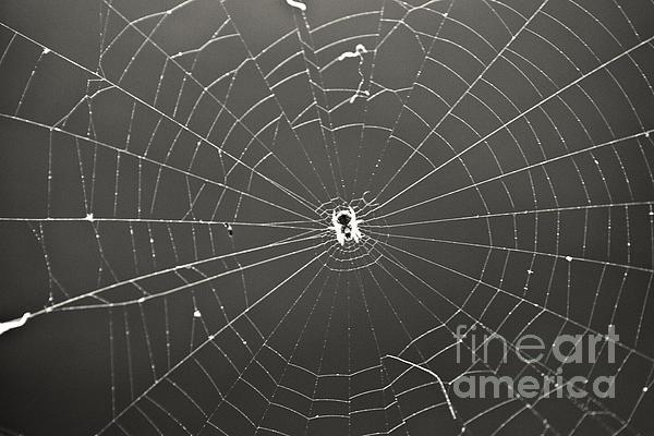 Itsy Bitsy Spider Print by Leslie Leda