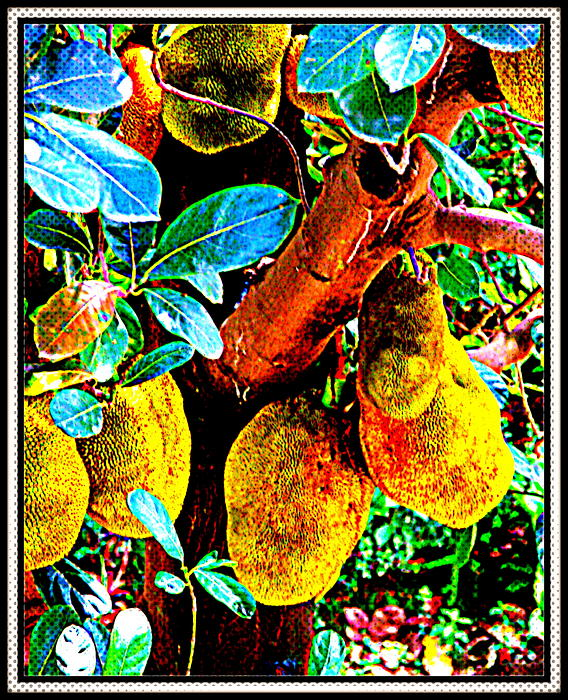 Anand Swaroop Manchiraju - Jack Fruit-1