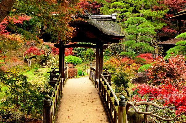 Japanese Garden In Autumn 7 Print by Dean Harte