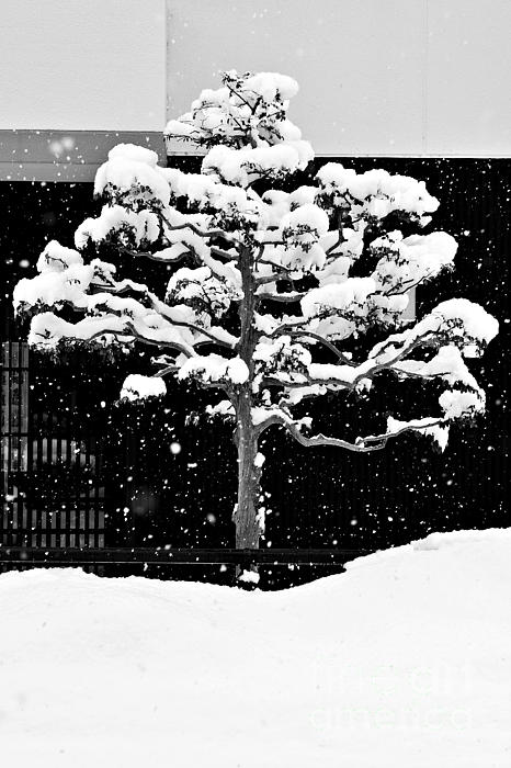 Dean Harte - Japanese Tree in the Snow