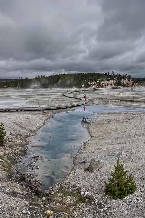 Japanese Woman With Umbrella At Norris Geyser Basin Print by Daniel Hagerman