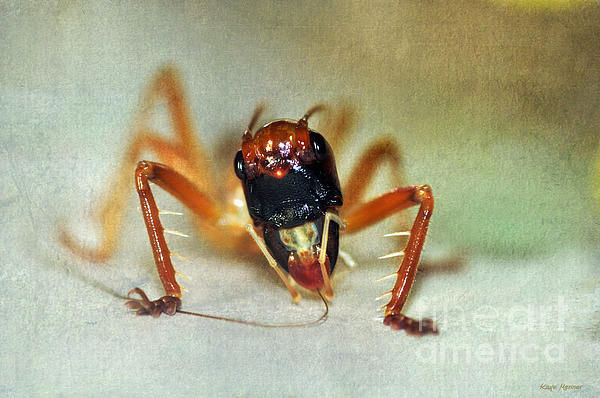 Jiminy Cricket 2 Print by Kaye Menner