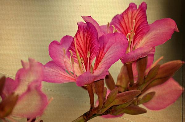 Fraida Gutovich - Joyful Bloom