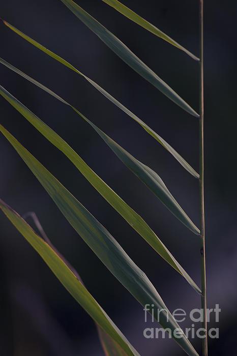 Just Grass Print by Heiko Koehrer-Wagner