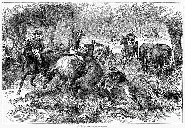 Kangaroo Hunting, 1876 Print by Granger