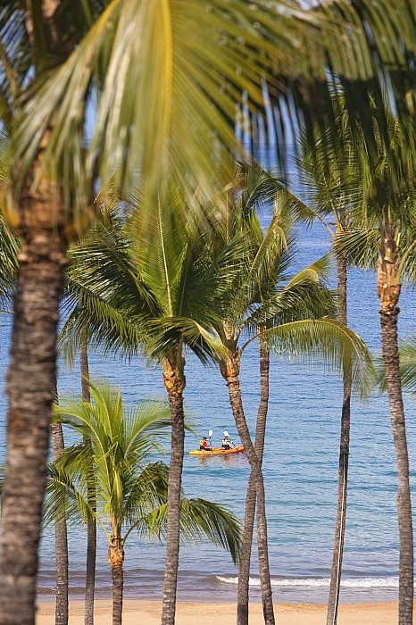 Kayakers Through Palms Print by Ron Dahlquist - Printscapes