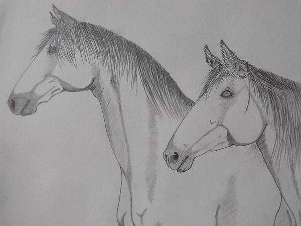 Gerald Strine - Keiger Mustangs