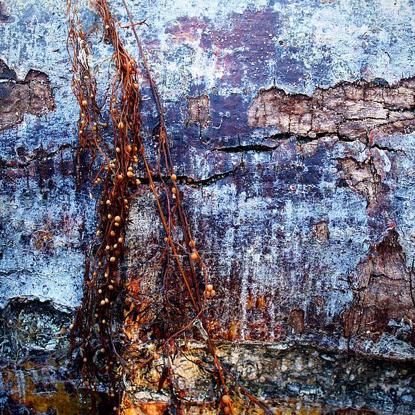 Richard George - Kelp Pods On Driftwood