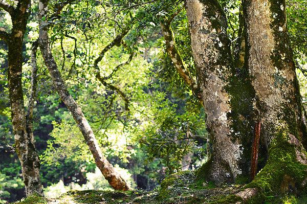 Kingdom Of The Trees. Peradeniya Botanical Garden. Sri Lanka Print by Jenny Rainbow