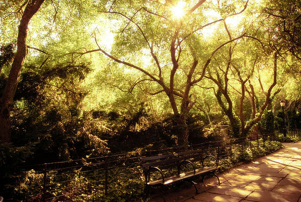Kissed By The Sun - Central Park - New York City Print by Vivienne Gucwa