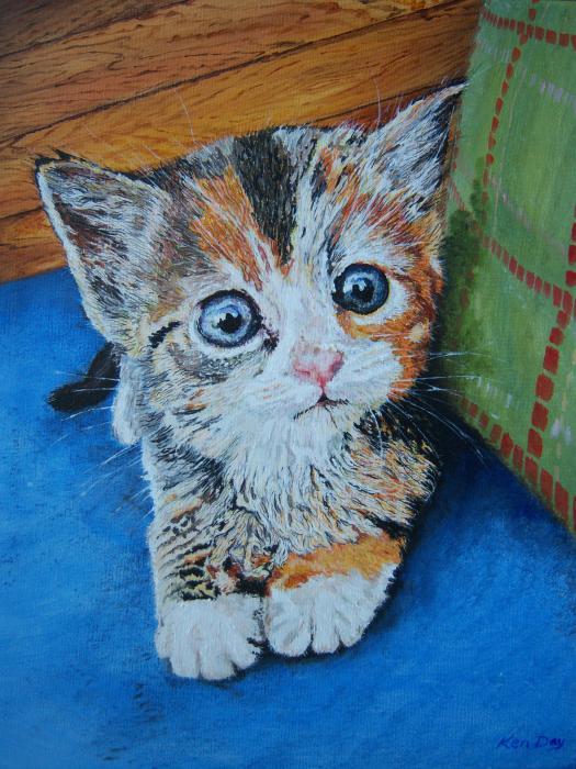 Ken Day - Kitten
