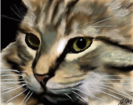 Jack Jk Morland - Kitty 3