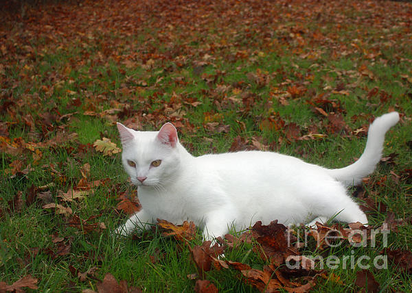 Kitty In The Leaves Print by Tyra  OBryant