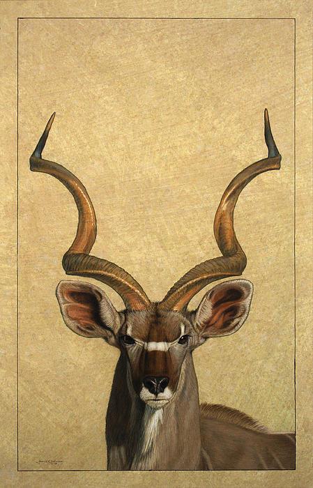 Kudu Print by James W Johnson