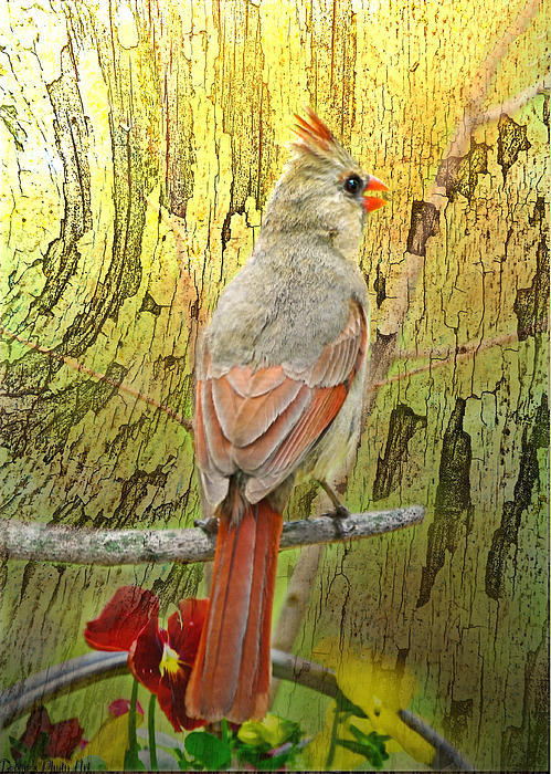 Debbie Portwood - Lady Cardinal on wood texture