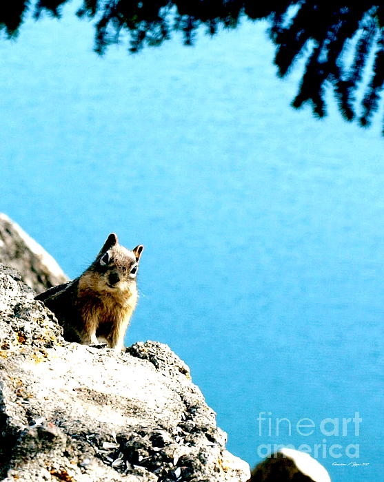 Christine S Zipps - Lake Dillon Chipmunk
