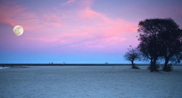 Lake Shore Evening Print by Donald Schwartz