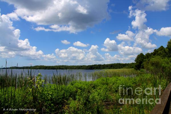 Lake Tarpon Photograph  - Lake Tarpon Fine Art Print