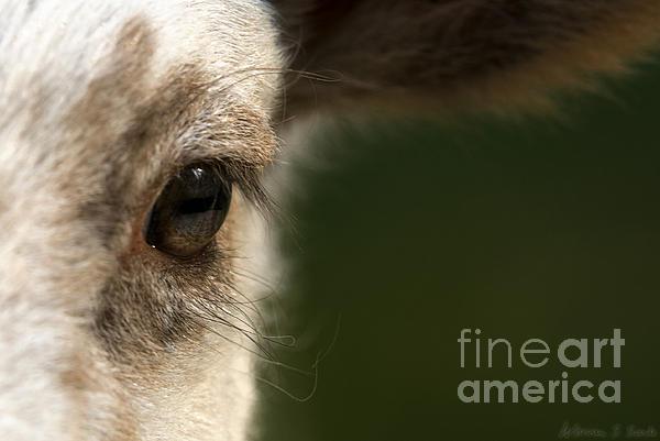 Lamb Eyelashes Print by Warren Sarle