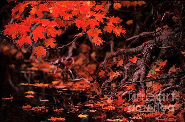 Bob Christopher - Land Of The Maple