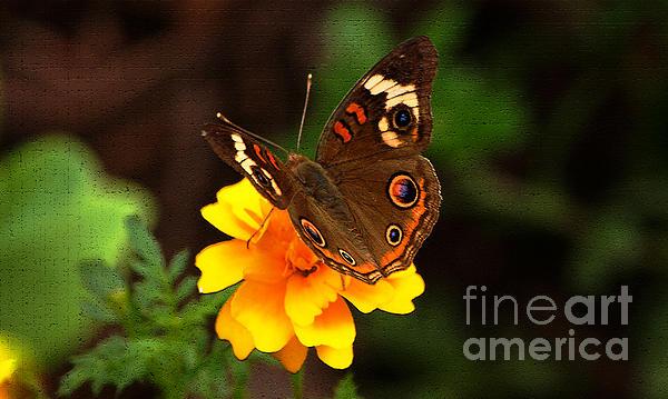 Olahs Photography - Landing on Yellow