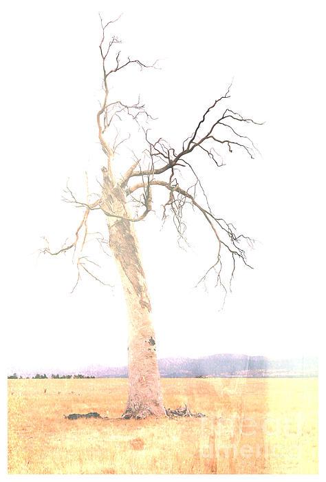 Cate Legnoverde - Landscape I - Tasmania