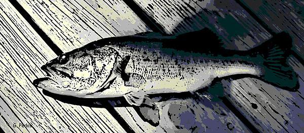 Largemouth Bass Print by George Pedro