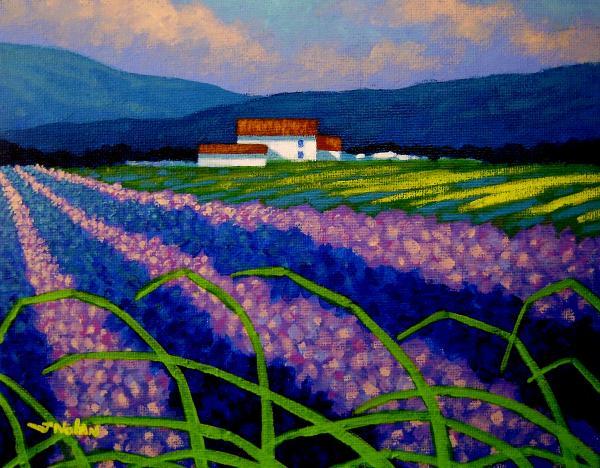 Lavender Field France Print by John  Nolan