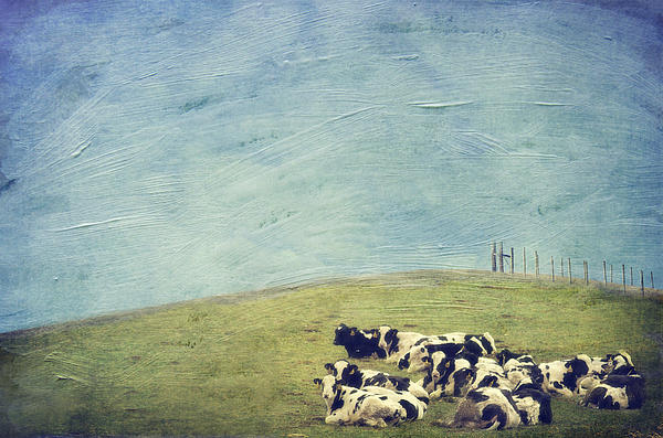 Kathy Jennings - Lazy Cows