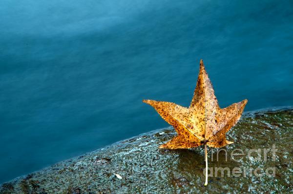 Leaf Print by Chris Mason