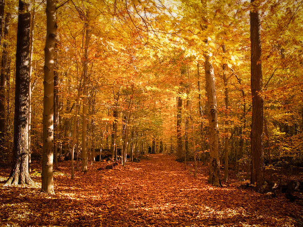 Leaf Covered Pathway In A Golden Forest Print by Chantal PhotoPix