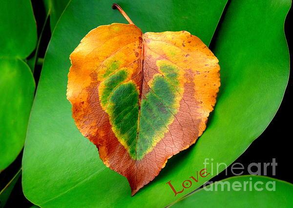 Leaf Leaf Heart Love Print by Renee Trenholm