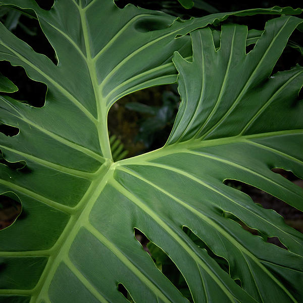 Leaf With Empty Space Print by David Coblitz