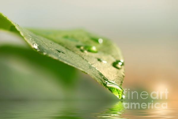 Leaf With Water Droplets Print by Sandra Cunningham