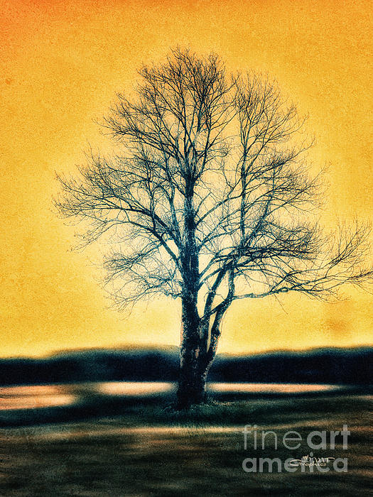 Leafless Tree Print by Jutta Maria Pusl