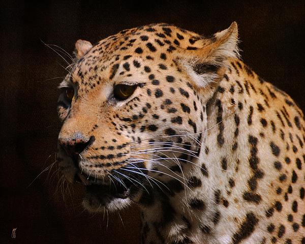 Leopard IIi Print by Jai Johnson