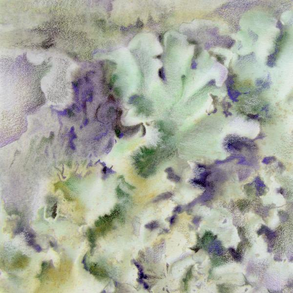 Lichen Print by Mindy Lighthipe