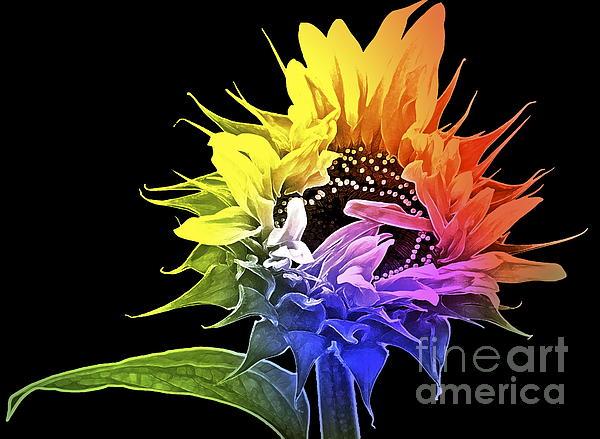 Gwyn Newcombe - Life is Like a Rainbow ...