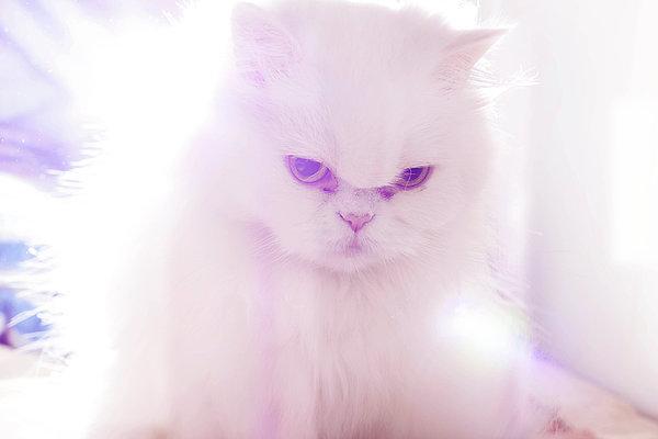 Light Cat Print by Luis Hernández Diaz