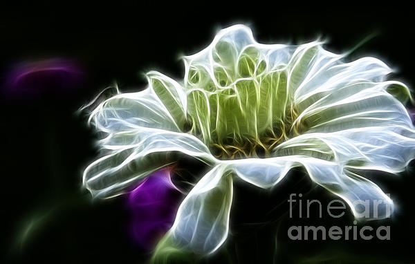 Darleen Stry - Light Green Zinnia Flower
