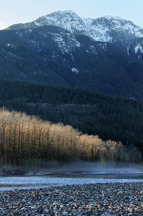 Light In The Trees In Squamish Print by Pierre Leclerc Photography
